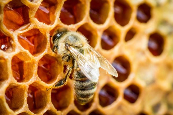 bee-honeycomb
